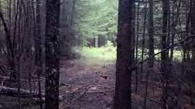 Floresta escura Fotos de Stock