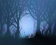 Floresta escura assustador. Fotografia de Stock Royalty Free