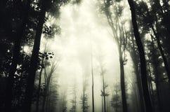Floresta escura com árvores velhas Imagem de Stock Royalty Free