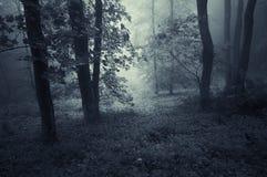 Floresta escura com embaçamento azul foto de stock