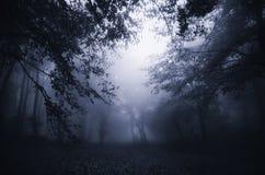 Floresta escura com névoa azul Imagem de Stock