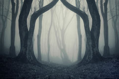 Floresta escura com névoa e árvores estranhas enormes symmertical no Dia das Bruxas Foto de Stock Royalty Free