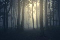 Floresta escura do conto de fadas misterioso com névoa Foto de Stock Royalty Free