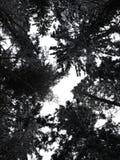A floresta escura, estarrecente espera aquelas que se arriscam foto de stock royalty free