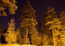 Floresta escura na noite Foto de Stock Royalty Free