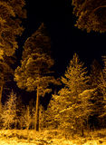Floresta escura na noite Fotografia de Stock