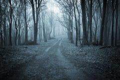 Floresta escura no outono atrasado Foto de Stock