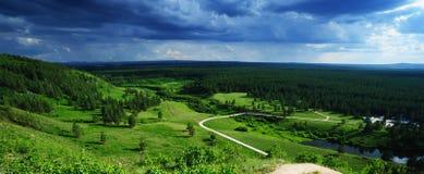 Floresta espectacular das coníferas foto de stock royalty free