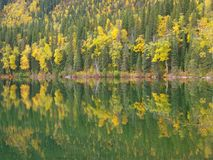 Floresta espelhada no lago Foto de Stock Royalty Free