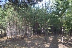 Floresta esquecida Fotografia de Stock Royalty Free