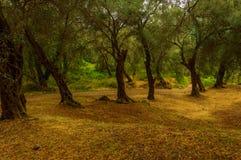 Floresta estranha Imagem de Stock Royalty Free
