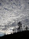 Floresta estranha e céu estranho Fotografia de Stock