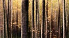 Floresta europeia colorida Fotos de Stock Royalty Free