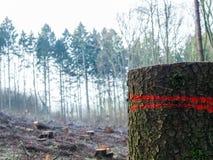 Floresta europeia com as árvores reduzidas numerosas, um tronco no primeiro plano imagens de stock