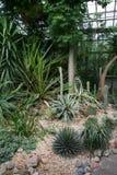 Floresta exótica Foto de Stock