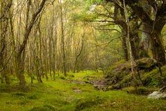 Floresta feericamente fotos de stock royalty free