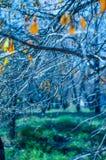Floresta feericamente Foto de Stock Royalty Free