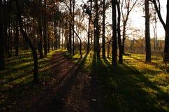 Floresta feericamente Foto de Stock