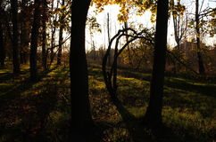 Floresta feericamente Imagens de Stock