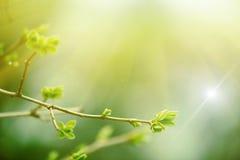 Floresta feericamente Imagem de Stock