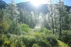 A floresta feericamente. foto de stock royalty free