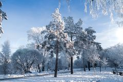 Floresta feericamente do inverno - Frosty Day fotografia de stock royalty free