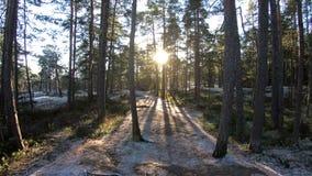 Floresta finlandesa no inverno adiantado filme