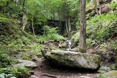 Floresta Deciduous com ravinas fotos de stock