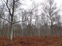 floresta francesa Foto de Stock Royalty Free