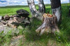 A floresta fresca cresce rapidamente na vida do coto ainda Fotografia de Stock