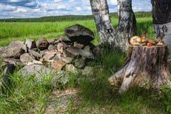 A floresta fresca cresce rapidamente na vida do coto ainda Imagem de Stock