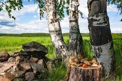 A floresta fresca cresce rapidamente na vida do coto ainda Fotos de Stock Royalty Free