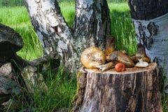 A floresta fresca cresce rapidamente na vida do coto ainda Fotos de Stock