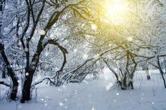 Floresta fria nevado do inverno Fotos de Stock Royalty Free
