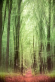 Floresta frondosa em República Checa Imagem de Stock Royalty Free