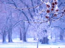 A floresta gelada Foto de Stock Royalty Free