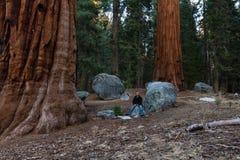 Floresta gigante na sequoia NP Fotografia de Stock
