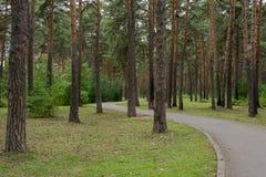 Floresta grossa Fotografia de Stock Royalty Free