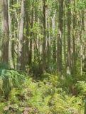 Floresta grossa de HDR Fotografia de Stock Royalty Free