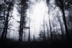 Floresta grossa misteriosa escura com névoa em Dia das Bruxas Fotografia de Stock