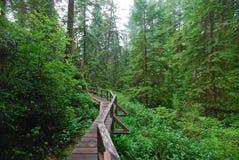 Floresta húmida Fotografia de Stock