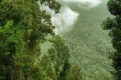 Floresta húmida foto de stock