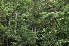 Floresta húmida imagem de stock royalty free