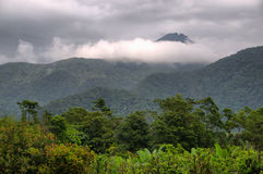 Floresta húmida Imagens de Stock Royalty Free