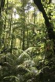 Floresta húmida Fotos de Stock