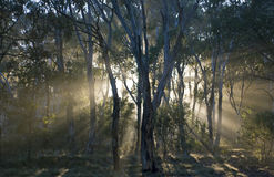 Floresta húmida, Austrália. Imagem de Stock