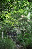 Floresta húmida, Austrália Imagens de Stock