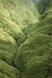 Floresta húmida de Maui. Imagens de Stock