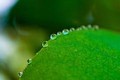 A floresta húmida deixa cair #2 imagens de stock