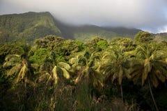 Floresta húmida, Dominica Foto de Stock Royalty Free